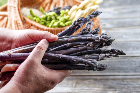 Fresh raw purple asparagus holding in man�s hand as close-up