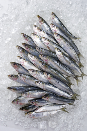 Raw sardines on ice offered as top view