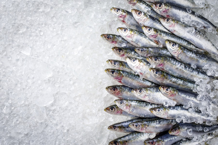 Raw sardine on ice offered as top view with copy space right Reklamní fotografie