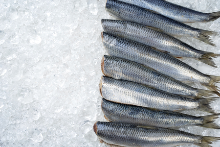 Raw herring without heads on ice offered as top view