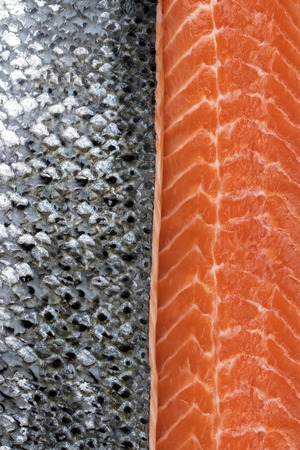 Fresh raw salmon fillet with silver fish skin as background