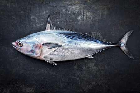 Fresh saltwater bonito as top view on a black rustic background with copy space