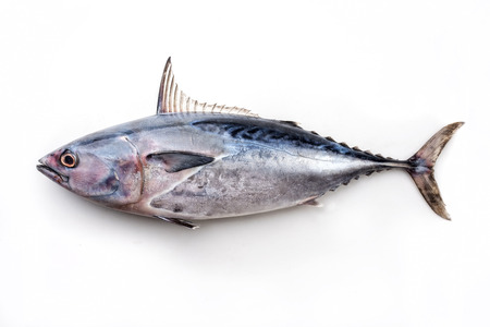 Fresh saltwater bonito as top view on white background with copy space Stockfoto
