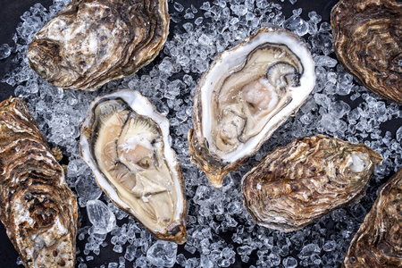 Fresh rock oyster offered as closeup opened with on crushed ice with copy space Stockfoto