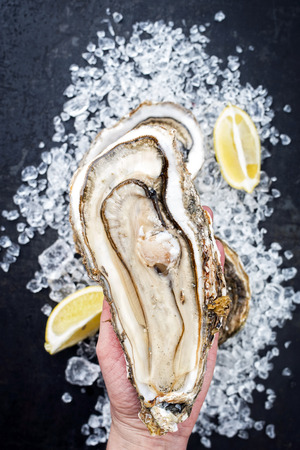Fresh large rock oyster offered in a woman hand as closeup opened with sliced lemon on crushed ice with copy space Imagens