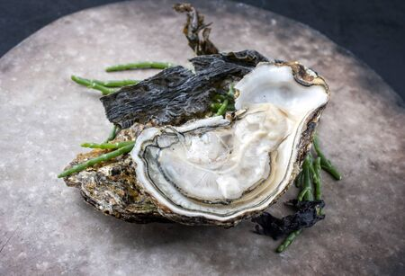 Fresh rock oyster offered as closeup opened with glasswort and algae as closeup on a modern design plate Stock Photo