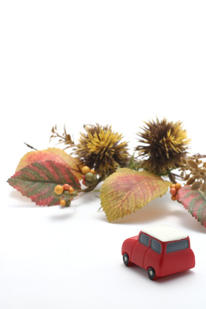 street shot: Car, Autumn leaves, and chestnut on white background. Concept of driving in autumn. Stock Photo