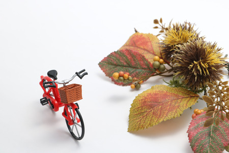 mini bike: Bicycle, autumn leaves, and chestnut on white background. Concept of cycling in autumn.