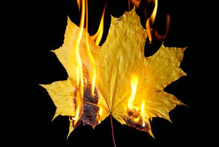 Burning maple leaf on black background 스톡 콘텐츠