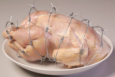 GMO chicken on a white plate. Concept genetically altered or modified food