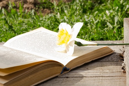 Summer pictures with an open book. Open book on the background of nature. Knowledge is power. Flowers in the book. Education. on the wooden table. Teachers day. Empty space for text Stock Photo