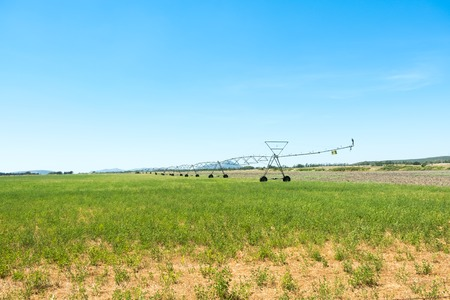An afternoon view of a center pivot sprinkler system spraying water on a farm field of wheat on a hot summer day. Stock Photo