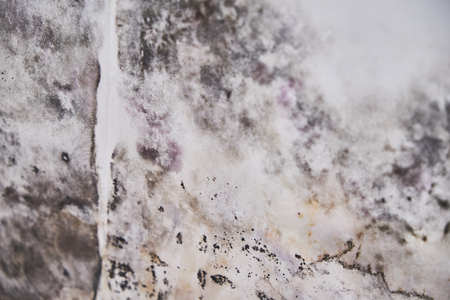 Close-up Of A Shocked Woman Looking At Mold On Wall 免版税图像