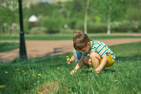 Small boy playing in spring forest, picking yellow dandelions flowers.