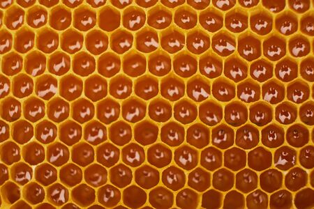 pattern of a section of wax honeycomb from a bee hive filled with golden honey. Background texture
