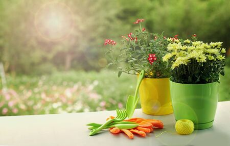 yellow and green plastic pots with flowers prepared for planting in the garden. gardening tools are on the table