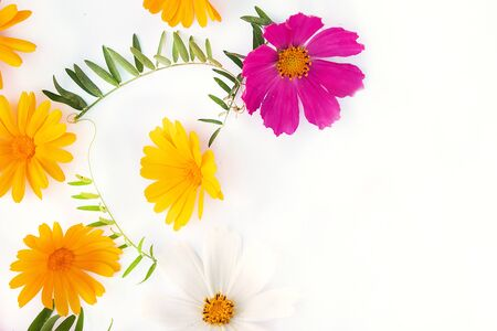 Flowers composition. various colorful flowers on white background. Flat lay, top view. yellow and red wildflowers Stock Photo