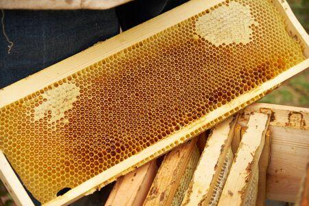 frame honey 스톡 콘텐츠