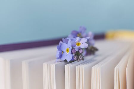 macro photo open books with a spring flowers nostalgic romantic mood concept Фото со стока
