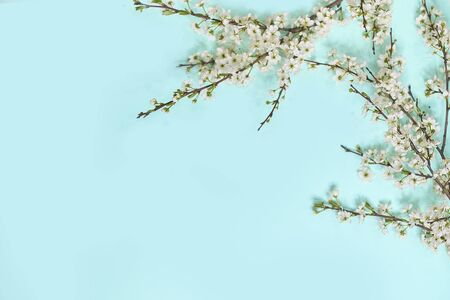 little white flowers on blue background. Top view. Time for love and greetings. Spring Time Change, Spring flowers.