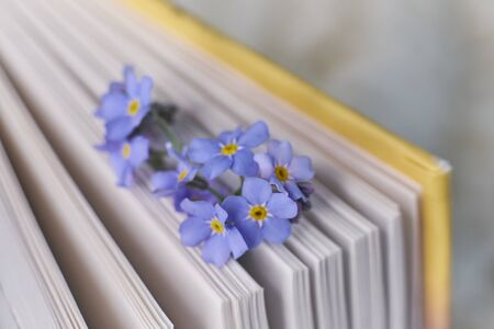macro photo open books with a spring flowers nostalgic romantic mood concept Zdjęcie Seryjne