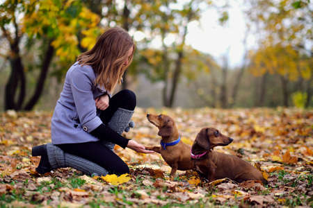 Give me five. Dog pressing his paw against a woman hand. young woman training her dachshund