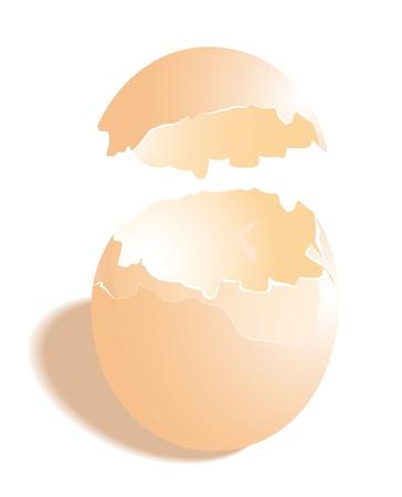 broken eggs: The shell of hen egg