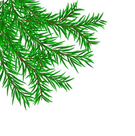 snow wreath: The fir-tree branch Illustration