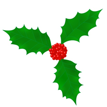 The leafs and berries of holly   Vector