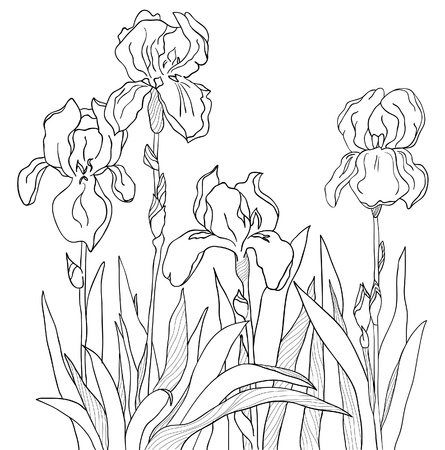 The sketch from a four flowers Vector