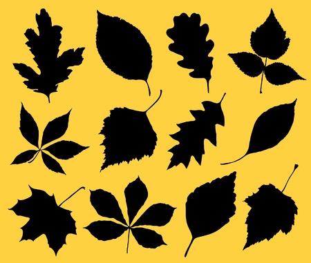sicomoro: La silhouette nera di foglie. Vettoriali