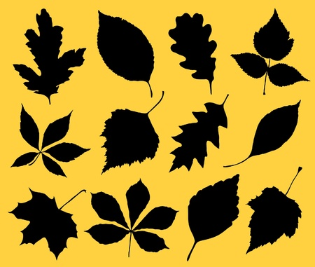 plantain: The black silhouette of leafs.