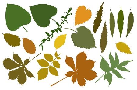 weegbree: De kleur silhouetten van bladeren Stock Illustratie