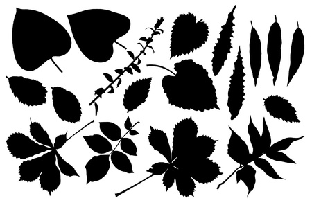 lush foliage: The black silhouette of leafs