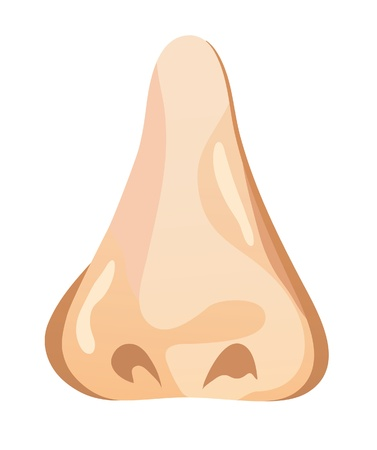 noses: The illustration of a human nose. Vector illustration
