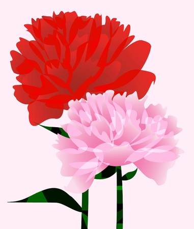 The abstract background with two peony   Vector