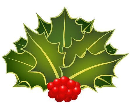 The christmas holly leafs with berries Stock Vector - 10692437