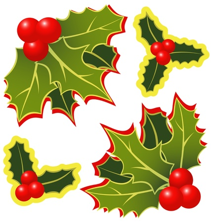 The christmas holly leafs with berries Stock Vector - 10764849