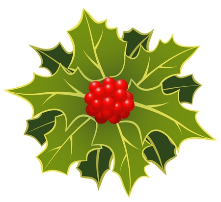 The christmas holly leafs with berries Stock Vector - 10764850