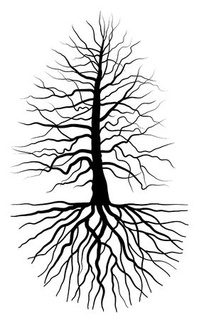 deciduous: The black silhouette of a tree with root