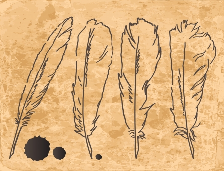 feather quill: Four drawing feathers on old paper