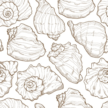Hand drawing seashell pattern on white background Vector