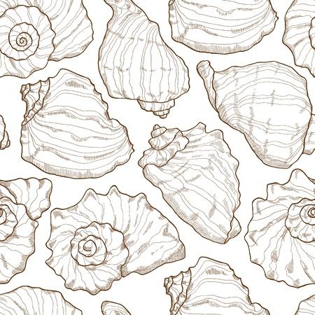 seashell: Hand drawing seashell pattern on white background