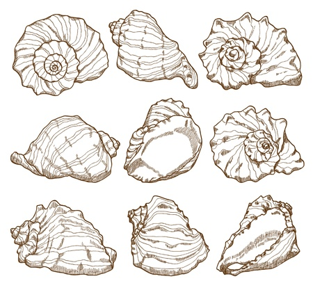 Hand drawing seashell set isolated on white Vector