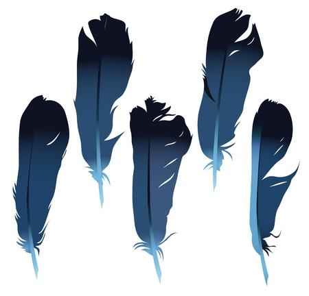Five bird feathers isolated on white  Set Stock Vector - 17758509