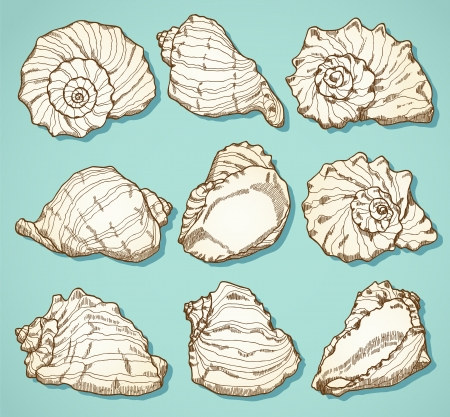 Seashell set. Hand drawn illustration in vintage style Stock Vector - 20689710