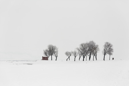 rime: Lonely tree in a soft , tranquil and snowy environment in winter time. Stock Photo