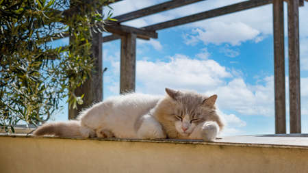 Feral cat sleeping in the nature during a sunny day. Alley cat relaxing under the sun. Cat living outdoor in the garden heats up under the rays of the sun.