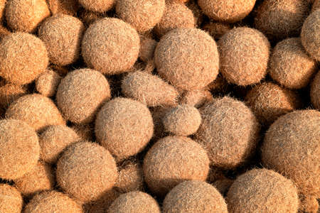 Close up on thousands of ball-shaped algae. Hundreds of sphere of poseidon beside the sea in a sunny day. Brown egagrophilus over the sand in the beach also called Neptune's balls or sea's kiwi. Stockfoto