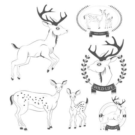 venado cola blanca: Conjunto de ciervos vintage, emblemas, etiquetas, vector logo Vectores